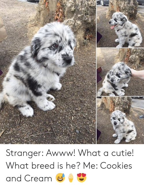 Cookies, Memes, and Awww: Stranger: Awww! What a cutie! What breed is he?  Me: Cookies and Cream  😅🍦😍