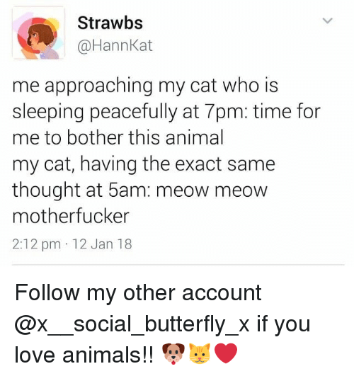 Animals, Love, and Memes: Strawbs  @HannKat  me approaching my cat who is  sleeping peacefully at 7pm: time for  me to bother this animal  my cat, having the exact same  thought at 5am: meow meow  motherfucker  2:12 pm 12 Jan 18 Follow my other account @x__social_butterfly_x if you love animals!! 🐶🐱❤