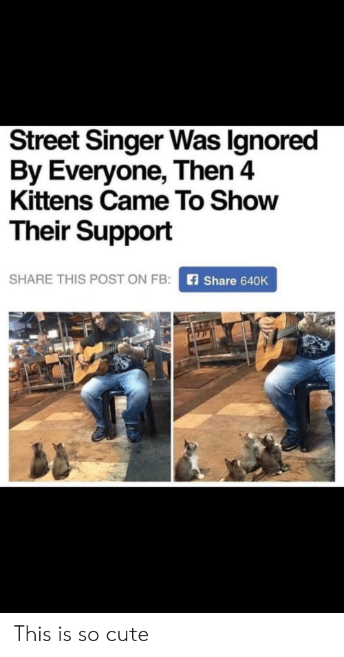 Cute, Kittens, and Singer: Street Singer Was Ignored  By Everyone, Then 4  Kittens Came To Show  Their Support  SHARE THIS POST ON FB:  Share 640K This is so cute