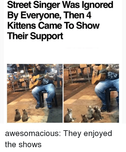 Tumblr, Blog, and Http: Street Singer Was lgnored  By Everyone, Then 4  Kittens Came To Show  Their Support awesomacious:  They enjoyed the shows