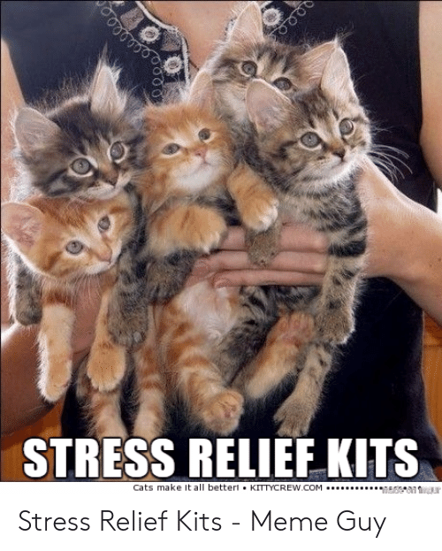 Funny Stress Memes: STRESS RELIEF KITS  Cats make It all better.KITTYCREW COM Stress Relief Kits - Meme Guy