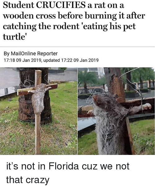Crazy, Cross, and Florida: Student CRUCIFIES a rat on a  wooden cross before burning it after  catching the rodent 'eating his pet  turtle'  By MailOnline Reporter  17:18 09 Jan 2019, updated 17:22 09 Jan 2019 it's not in Florida cuz we not that crazy