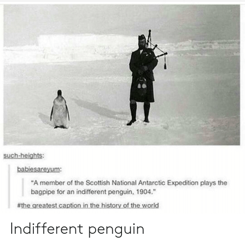 """Penguin, Scottish, and For: such-heights:  babiesareyum:  """"A member of the Scottish National Antarctic Expedition plays the  bagpipe for an indifferent penguin, 1904.""""  # thegreatest captioninthe-historyoftheworld Indifferent penguin"""