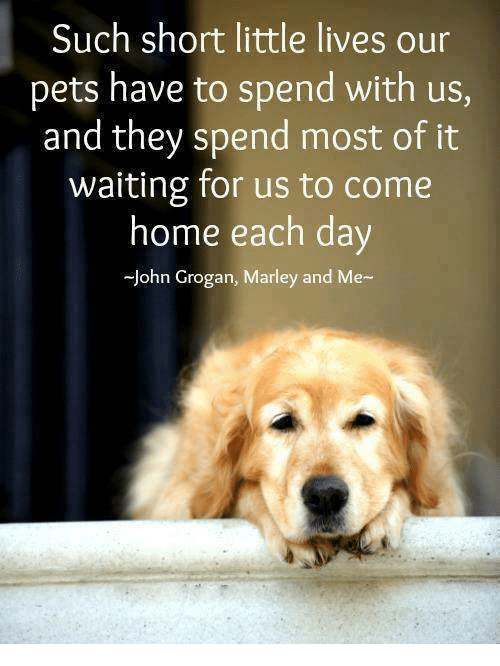 Memes, Pets, and Home: Such short little lives our  pets have to spend with us,  and they spend most of it  waiting for us to come  home each day  John Grogan, Marley and Me