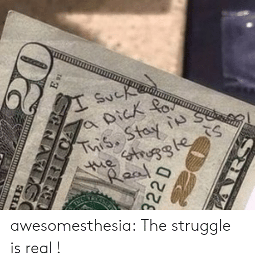 Struggle, The Struggle Is Real, and Tumblr: Sucke  a Dick  Tuis. Stay is  e truggte  Raal  LRICA  22 D  HARS awesomesthesia:  The struggle is real !