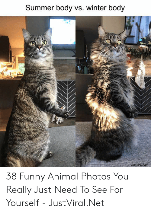 Funny, Winter, and Summer: Summer body vs. winter body  JustViral Net 38 Funny Animal Photos You Really Just Need To See For Yourself - JustViral.Net