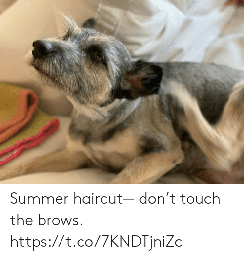 Haircut, Memes, and Summer: Summer haircut— don't touch the brows. https://t.co/7KNDTjniZc