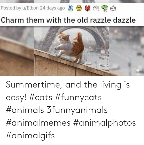 Living: Summertime, and the living is easy! #cats #funnycats #animals 3funnyanimals #animalmemes #animalphotos #animalgifs