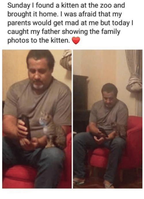 Family, Parents, and Home: Sunday I found a kitten at the zoo and  brought it home. I was afraid that my  parents would get mad at me but todayl  caught my father showing the family  photos to the kitten.