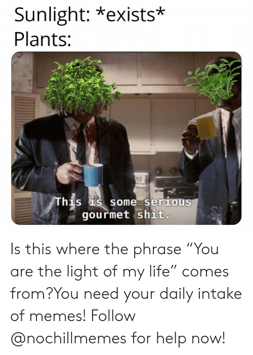"""Life, Memes, and Shit: Sunlight: *exists*  Plants:  hjs  s some serious  gourmet shit. Is this where the phrase""""You are the light of my life"""" comes from?You need your daily intake of memes! Follow @nochillmemes for help now!"""