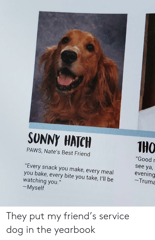 """Ill Be Watching You: SUNNY HATC  THO  """"Good  see ya,  evening  -Truma  PAWS, Nate's Best Friend  """"Every snack you make, every meal  you bake, every bite you take, I'll be  watching you.""""  -Myself They put my friend's service dog in the yearbook"""