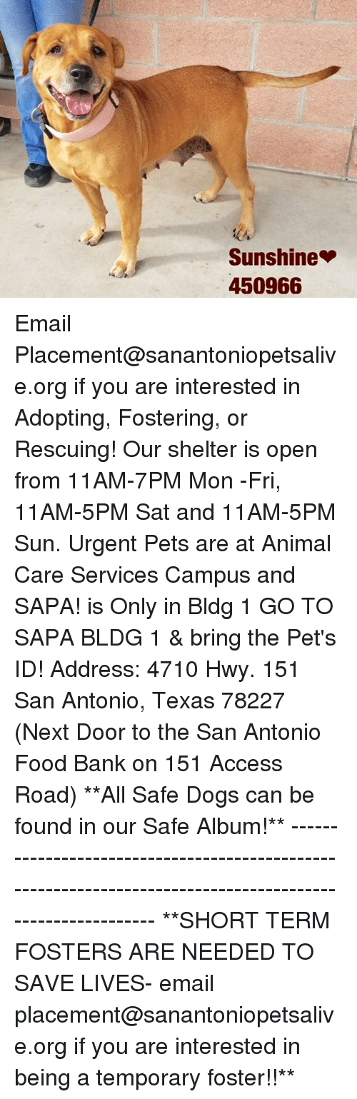 Dogs, Food, and Memes: Sunshine  450966 Email Placement@sanantoniopetsalive.org if you are interested in Adopting, Fostering, or Rescuing!  Our shelter is open from 11AM-7PM Mon -Fri, 11AM-5PM Sat and 11AM-5PM Sun.  Urgent Pets are at Animal Care Services Campus and SAPA! is Only in Bldg 1 GO TO SAPA BLDG 1 & bring the Pet's ID! Address: 4710 Hwy. 151 San Antonio, Texas 78227 (Next Door to the San Antonio Food Bank on 151 Access Road)  **All Safe Dogs can be found in our Safe Album!** ---------------------------------------------------------------------------------------------------------- **SHORT TERM FOSTERS ARE NEEDED TO SAVE LIVES- email placement@sanantoniopetsalive.org if you are interested in being a temporary foster!!**