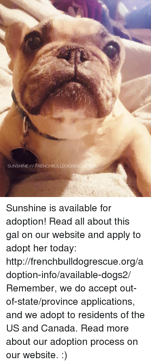 Memes, 🤖, and Sunshine: SUNSHINE FRENCHBULLDOGRE Sunshine is available for adoption! Read all about this gal on our website <location, likes, dislikes> and apply to adopt her today: http://frenchbulldogrescue.org/adoption-info/available-dogs2/  Remember, we do accept out-of-state/province applications, and we adopt to residents of the US and Canada. Read more about our adoption process on our website. :)