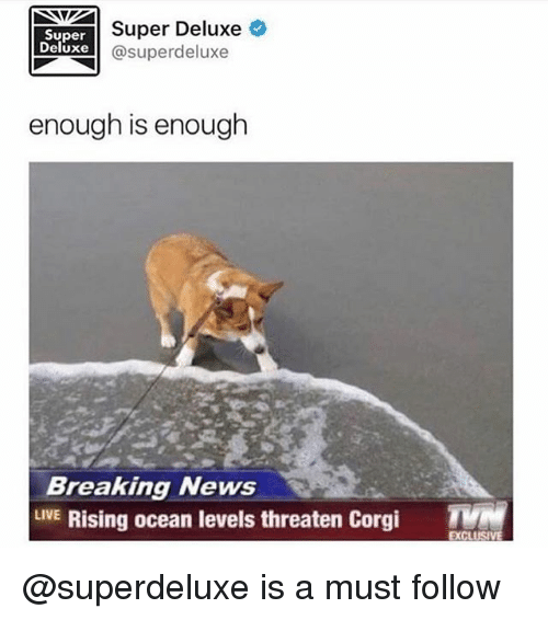 Corgi, News, and Breaking News: Super Deluxe  Super  Deluxe  @superdeluxe  enough is enough  Breaking News  LIVE Rising ocean levels threaten Corgi  EXCLUS @superdeluxe is a must follow