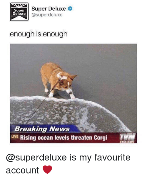 Corgi, Memes, and News: Super  Deluxe  Super Deluxe  @superdeluxe  enough is enough  Breaking News  LVE Rising ocean levels threaten Corgi  EXCLUS @superdeluxe is my favourite account ❤️