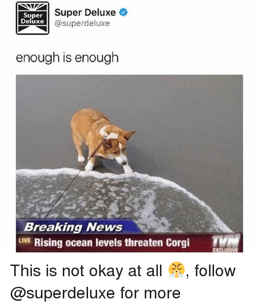 This Is Not Okay: Super  Deluxe  Super Deluxe  @superdeluxe  enough is enough  Breaking News  LVE Rising ocean levels threaten Corgi T  EXCL This is not okay at all 😤, follow @superdeluxe for more