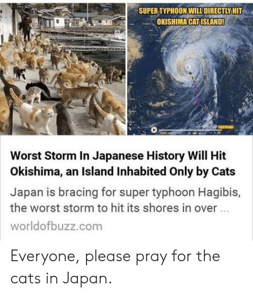 Cats, The Worst, and History: SUPER TYPHOON WILLDIRECTLY HIT  OKISHIMA CATISLAND!  Worst Storm In Japanese History Will Hit  Okishima, an Island Inhabited Only by Cats  Japan is bracing for super typhoon Hagibis,  the worst storm to hit its shores in over  worldofbuzz.com Everyone, please pray for the cats in Japan.