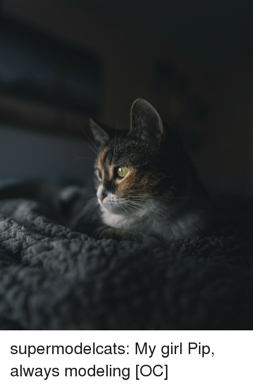Tumblr, Blog, and Girl: supermodelcats:  My girl Pip, always modeling [OC]