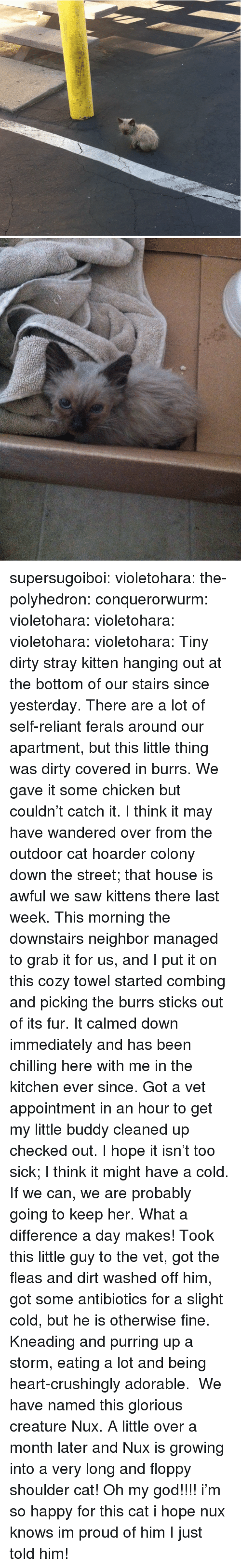 God, Oh My God, and Saw: supersugoiboi:  violetohara:  the-polyhedron:  conquerorwurm:  violetohara:   violetohara:   violetohara:   violetohara:   Tiny dirty stray kitten hanging out at the bottom of our stairs since yesterday. There are a lot of self-reliant ferals around our apartment, but this little thing was dirty  covered in burrs. We gave it some chicken but couldn't catch it. I think it may have wandered over from the outdoor cat hoarder colony down the street; that house is awful  we saw kittens there last week.  This morning the downstairs neighbor managed to grab it for us, and I put it on this cozy towel  started combing and picking the burrs  sticks out of its fur. It calmed down immediately and has been chilling here with me in the kitchen ever since. Got a vet appointment in an hour to get my little buddy cleaned up  checked out. I hope it isn't too sick; I think it might have a cold.  If we can, we are probably going to keep her.   What a difference a day makes! Took this little guy to the vet, got the fleas and dirt washed off him, got some antibiotics for a slight cold, but he is otherwise fine. Kneading and purring up a storm, eating a lot and being heart-crushingly adorable.   We have named this glorious creature Nux.   A little over a month later and Nux is growing into a very long and floppy shoulder cat!   Oh my god!!!!  i'm so happy for this cat i hope nux knows im proud of him  I just told him!