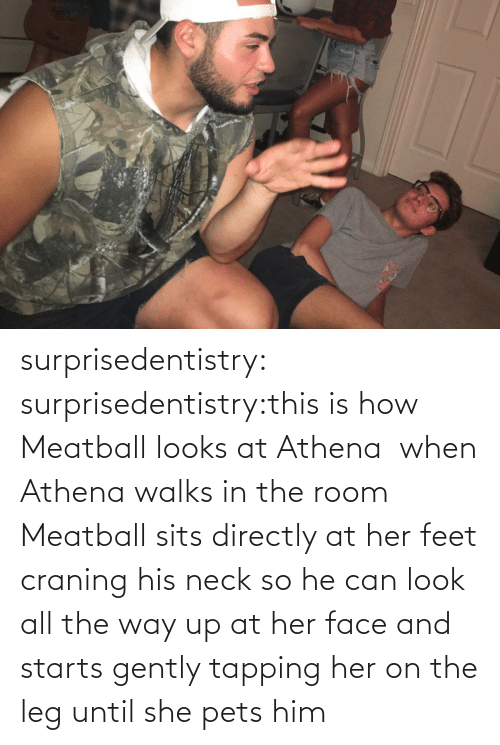 the room: surprisedentistry:  surprisedentistry:this is how Meatball looks at Athena  when Athena walks in the room Meatball sits directly at her feet craning his neck so he can look all the way up at her face and starts gently tapping her on the leg until she pets him