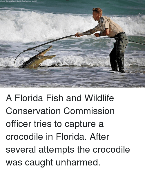 25 best memes about sun sentinel sun sentinel memes for Florida fish and wildlife officer