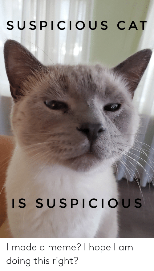 Suspicious: SUSPICIOUS CAT  IS SUSPICIOUS I made a meme? I hope I am doing this right?