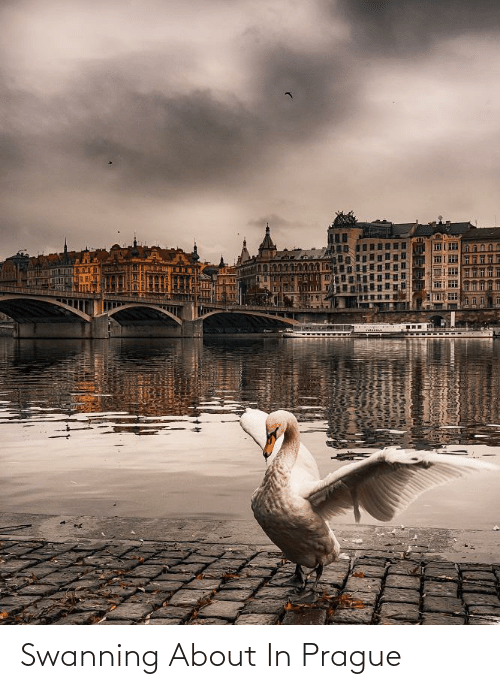 Prague: Swanning About In Prague