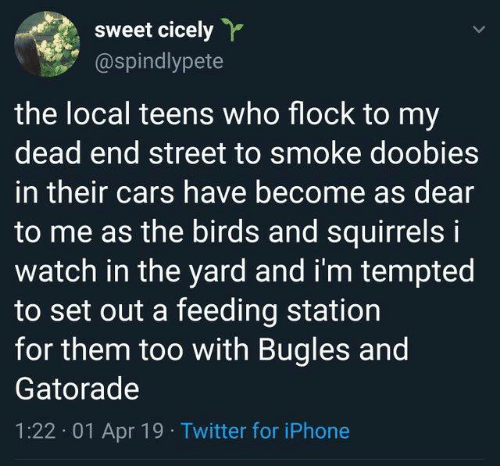 squirrels: sweet cicely  @spindlypete  the local teens who flock to my  dead end street to smoke doobies  in their cars have become as dear  to me as the birds and squirrels i  watch in the yard and i'm tempted  to set out a feeding station  for them too with Bugles and  Gatorade  1:22. 01 Apr 19 Twitter for iPhone