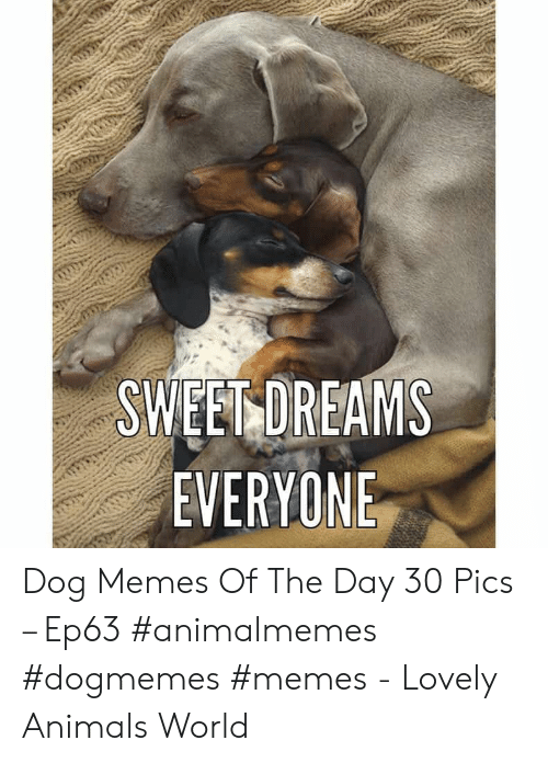 Animals, Memes, and World: SWEET DREAMS  EVERYONE Dog Memes Of The Day 30 Pics – Ep63 #animalmemes #dogmemes #memes - Lovely Animals World