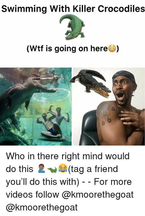 Memes, Videos, and Wtf: Swimming With Killer Crocodiles  (Wtf is going on here) Who in there right mind would do this 🤦🏾♂️🐊😂(tag a friend you'll do this with) - - For more videos follow @kmoorethegoat @kmoorethegoat