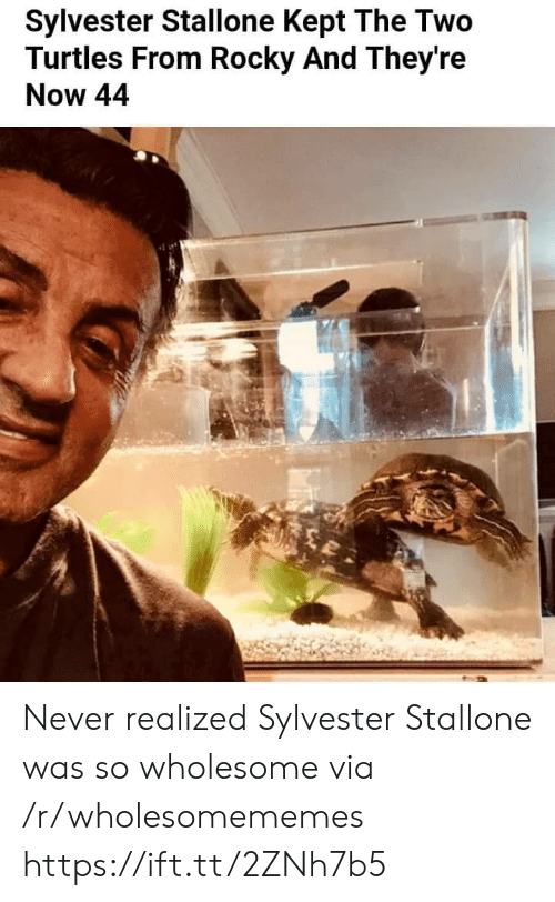 Rocky, Sylvester Stallone, and Wholesome: Sylvester Stallone Kept The Two  Turtles From Rocky And They're  Now 44 Never realized Sylvester Stallone was so wholesome via /r/wholesomememes https://ift.tt/2ZNh7b5