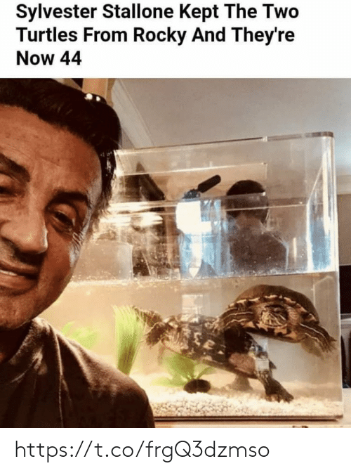 Memes, Rocky, and Sylvester Stallone: Sylvester Stallone Kept The Two  Turtles From Rocky And They're  Now 44 https://t.co/frgQ3dzmso