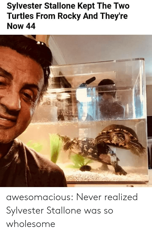 Rocky, Sylvester Stallone, and Tumblr: Sylvester Stallone Kept The Two  Turtles From Rocky And They're  Now 44 awesomacious:  Never realized Sylvester Stallone was so wholesome