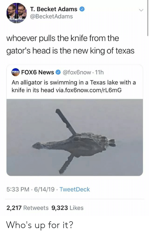Head, News, and Alligator: T.Becket Adams  @BecketAdams  Gs GOLD  NGS GOL  whoever pulls the knife from the  gator's head is the new king of texas  FOxe FOX6 News  @fox6now 1h  An alligator is swimming in a Texas lake with a  knife in its head via.fox6now.com/rL6mG  5:33 PM 6/14/19 TweetDeck  2,217 Retweets 9,323 Likes Who's up for it?