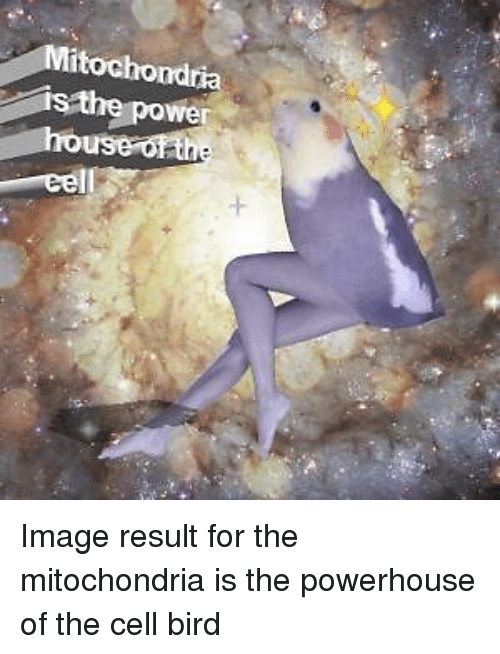 Image, Mitochondria, and Mitochondria Is the Powerhouse of the Cell: ta  we Image result for the mitochondria is the powerhouse of the cell bird
