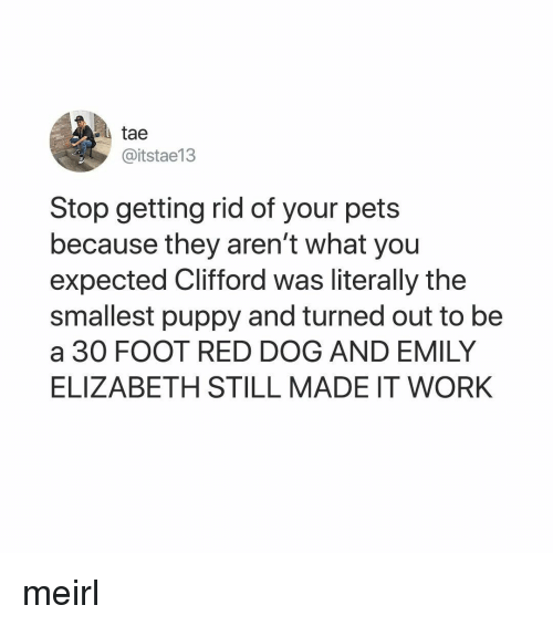 Work, Pets, and Puppy: tae  @itstae13  Stop getting rid of your pets  because they aren't what you  expected Clifford was literally the  smallest puppy and turned out to be  a 30 FOOT RED DOG AND EMILY  ELIZABETH STILL MADE IT WORK meirl