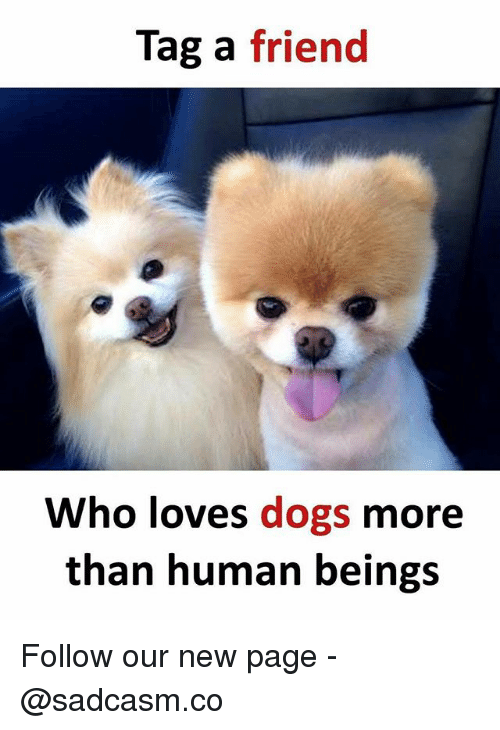 Dogs, Memes, and 🤖: Tag a friend  Who loves dogs more  than human beings Follow our new page - @sadcasm.co