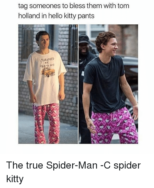 Hello, Memes, and Spider: tag someones to bless them with tom  holland in hello kitty pants  URVIVED The true Spider-Man -C spider kitty