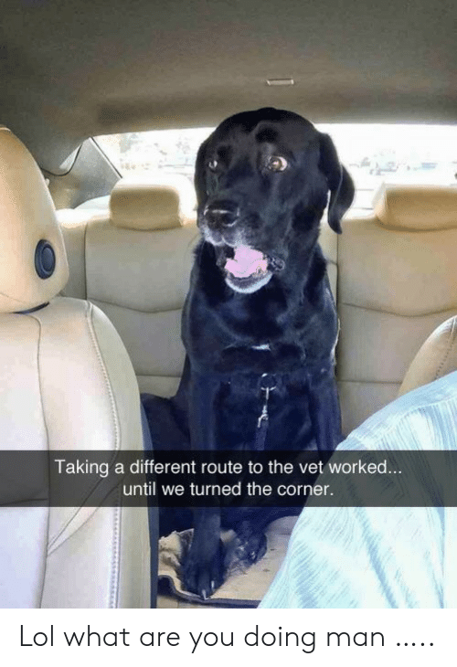 Lol, Man, and You: Taking a different route to the vet worked...  until we turned the corner. Lol what are you doing man …..