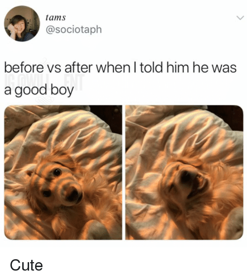 Cute, Memes, and Good: tams  @sociotaph  before vs after when l told him he was  a good boy Cute