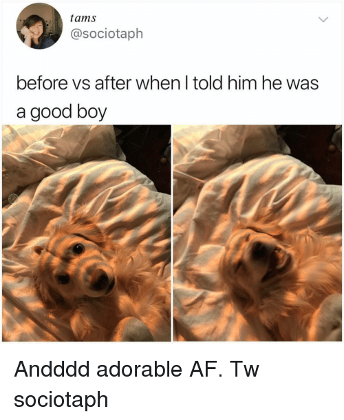 Af, Memes, and Good: tams  @sociotaph  before vs after when l told him he was  a good boy Andddd adorable AF. Tw sociotaph