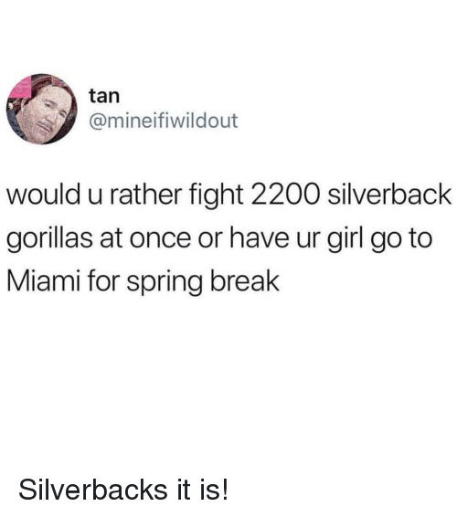 Spring Break, Break, and Girl: tan  @mineifiwildout  would u rather fight 2200 silverback  gorillas at once or have ur girl go to  Miami for spring break Silverbacks it is!