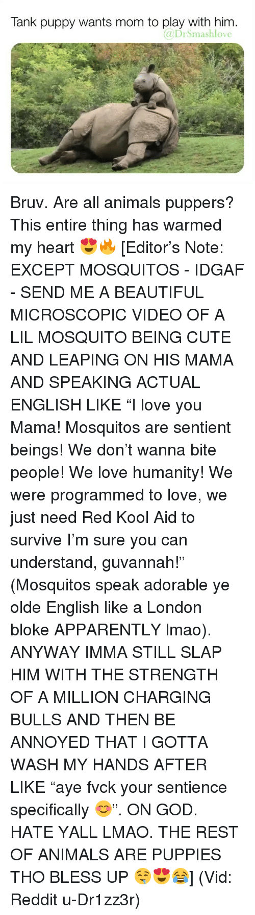"Animals, Apparently, and Beautiful: Tank puppy wants mom to play with him.  DrSmashlove Bruv. Are all animals puppers? This entire thing has warmed my heart 😍🔥 [Editor's Note: EXCEPT MOSQUITOS - IDGAF - SEND ME A BEAUTIFUL MICROSCOPIC VIDEO OF A LIL MOSQUITO BEING CUTE AND LEAPING ON HIS MAMA AND SPEAKING ACTUAL ENGLISH LIKE ""I love you Mama! Mosquitos are sentient beings! We don't wanna bite people! We love humanity! We were programmed to love, we just need Red Kool Aid to survive I'm sure you can understand, guvannah!"" (Mosquitos speak adorable ye olde English like a London bloke APPARENTLY lmao). ANYWAY IMMA STILL SLAP HIM WITH THE STRENGTH OF A MILLION CHARGING BULLS AND THEN BE ANNOYED THAT I GOTTA WASH MY HANDS AFTER LIKE ""aye fvck your sentience specifically 😊"". ON GOD. HATE YALL LMAO. THE REST OF ANIMALS ARE PUPPIES THO BLESS UP 🤤😍😂] (Vid: Reddit u-Dr1zz3r)"