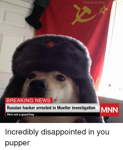 Disappointed, Funny, and News: @tank.sinatra  BREAKING NEWS  Russian hacker arrested in Mueller investigation  He's not a good boy  MNN Incredibly disappointed in you pupper