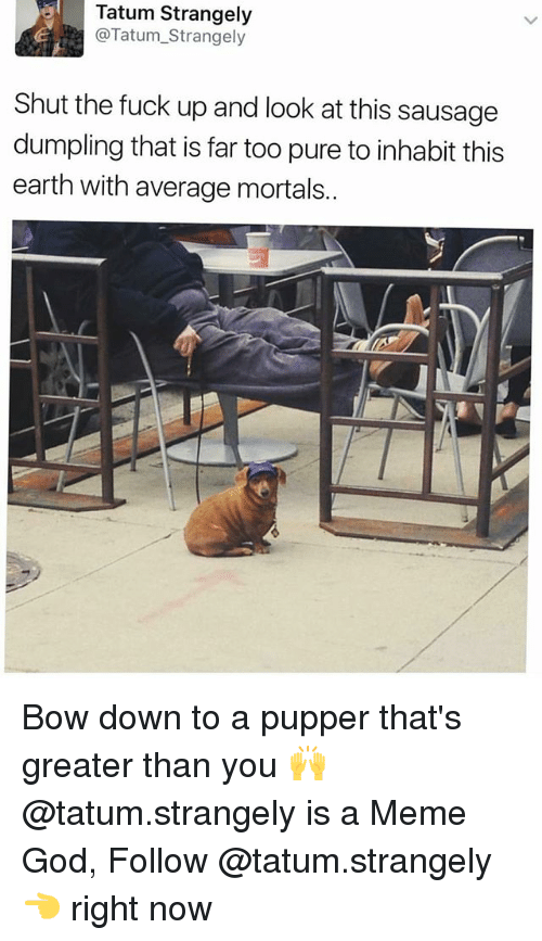 Bow Down: Tatum Strangely  @Tatum_Strangely  Shut the fuck up and look at this sausage  dumpling that is far too pure to inhabit this  earth with average mortals.. Bow down to a pupper that's greater than you 🙌 @tatum.strangely is a Meme God, Follow @tatum.strangely 👈 right now