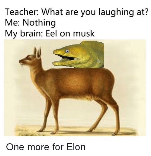Teacher, Brain, and One: Teacher: What are you laughing at?  Me: Nothing  My brain: Eel on musk One more for Elon