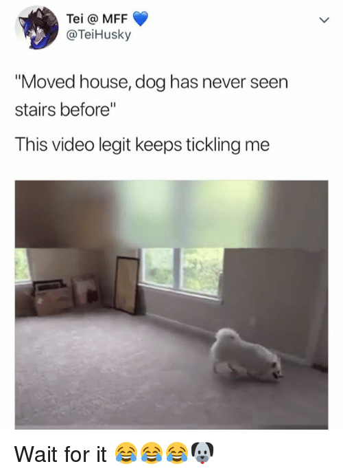 "House, Video, and Relatable: Tei @ MFF  @TeiHusky  ""Moved house, dog has never seen  stairs before""  This video legit keeps tickling me Wait for it 😂😂😂🐶"