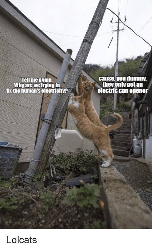 LOLcats: Tell me again,  Why are we trying to  fix the human's electricity?  cause, you dummy,  they only got an  electric can opener Lolcats