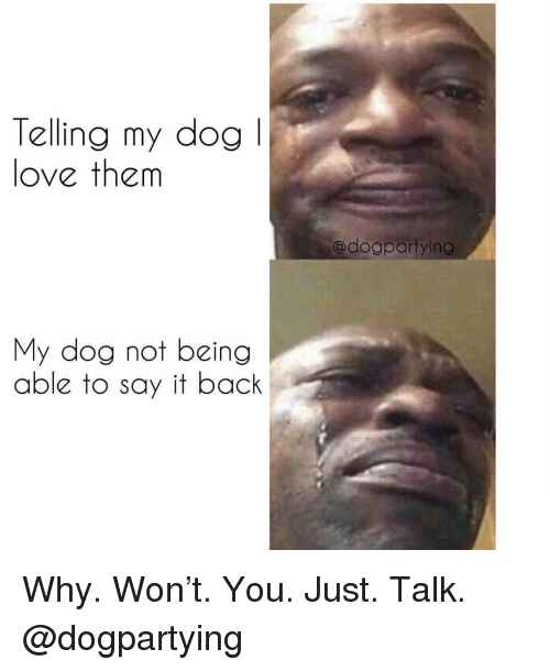 Love, Memes, and Say It: Telling my dogl  love them  adogpartying  My dog not being  able to say it back Why. Won't. You. Just. Talk. @dogpartying
