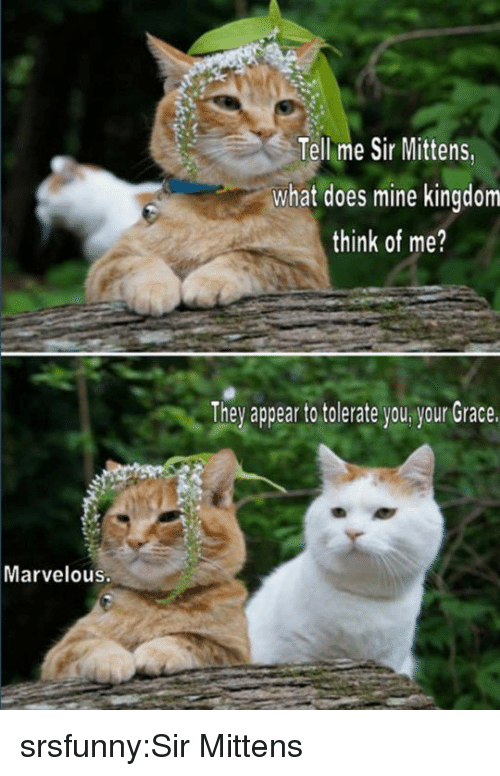 Tumblr, Blog, and Http: Tellme Sir Mittens,  what does mine kingdom  think of me?  They appear to tolerate you your Grace.  Marvelous. srsfunny:Sir Mittens